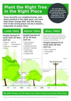 Plant the Right Tree in the Right Place. Large Trees: Height/spread of more than 40 ft, such as: Maple, Oak, Spruce, Pine, Birch, Sweetgum, Linden. Medium Trees: Height/spread of 25 to 40ft, such as: Washington hawthorn, Goldenraintree, Eastern redbud, American arborvitae, Dogwoods. Small Trees: Avoid planting within 20 ft of power lines. When planting within 20ft is unavoidable, use only shrubs and small trees. Height/spread of no more than 25ft, such as: Star magnolia, Crabapple, Lilac. For more tips on smart tree planting in your community, contact your local electric cooperative or visit www.arborday.org