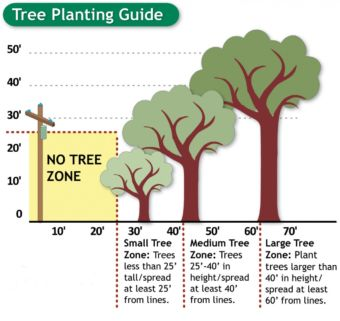 Tree Planting Guide - No Tree Zone=25' within a power pole. 25' to 40', Small Tree Zone: Trees less than 25' tall/spread at least 25' from lines. 40' to 60', Medium Tree Zone: Trees 25'-40' in height/spread at least 40' from lines. 60'+, Large Tree Zone: Plant trees larger than 40' in height/spread at least 60' from lines.
