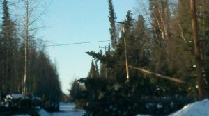 Downed power line on a road with trees