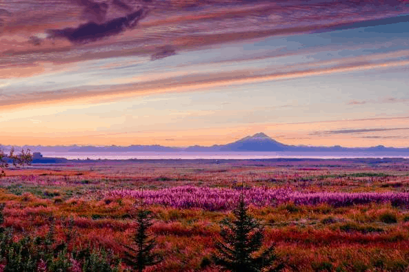 Rainbow colored skies with a mountain in the background, pink field of flowers in the foreground