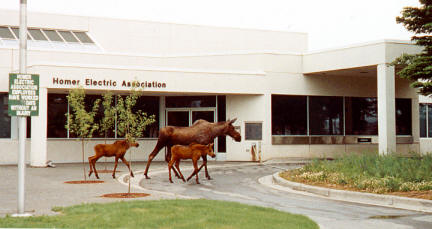 moose with two calves walking by a Homer Electric Association building