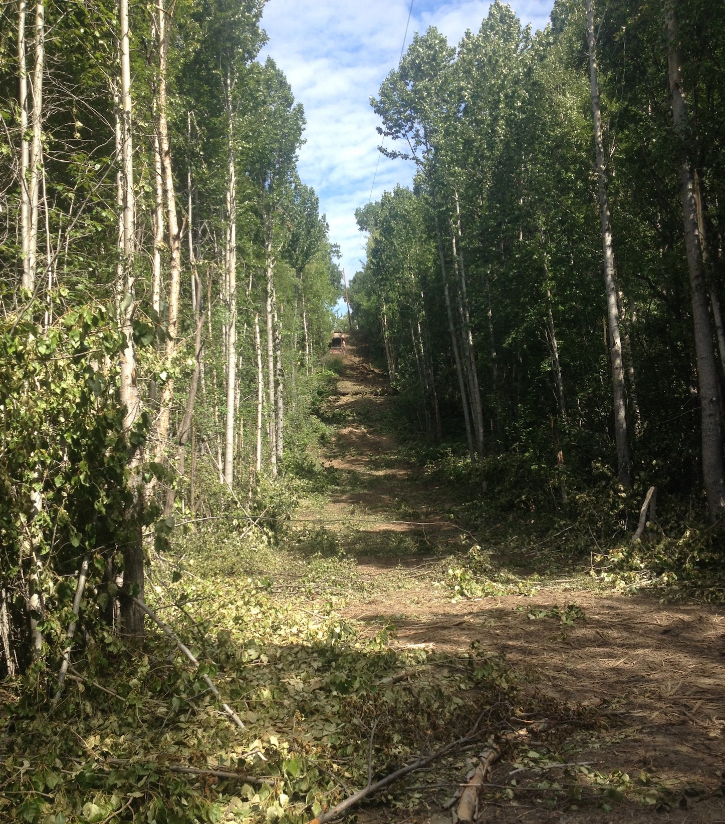 Robinson loop, AK, heavily wooded and shrubby area with power line above